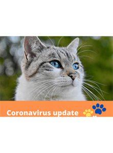 Coronavirus-Update-SA-940x675