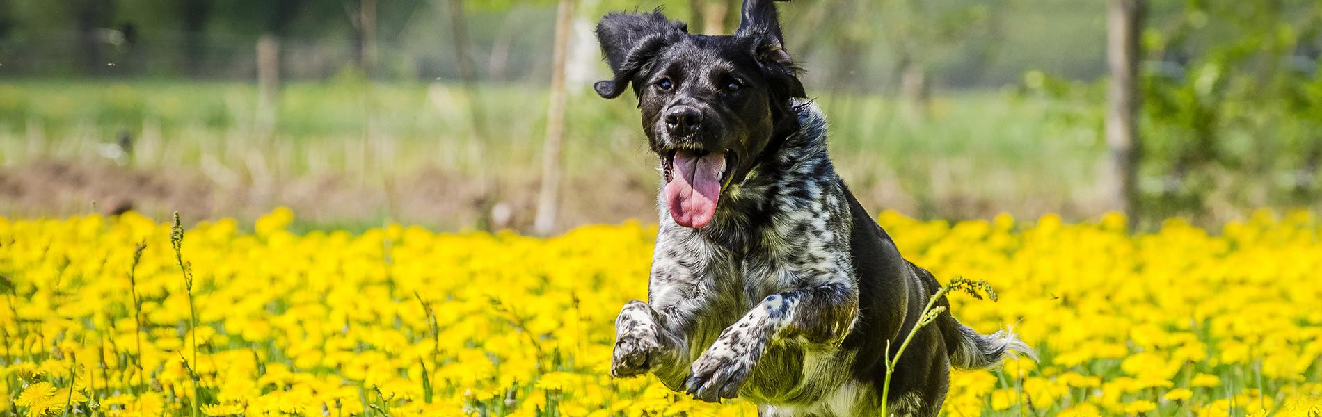 Castratie en sterilisatie hond